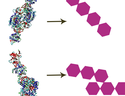 Scouting and screening of carbohydrate-active enzymes for specific applications