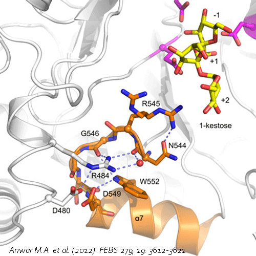 Fructosyltransferases
